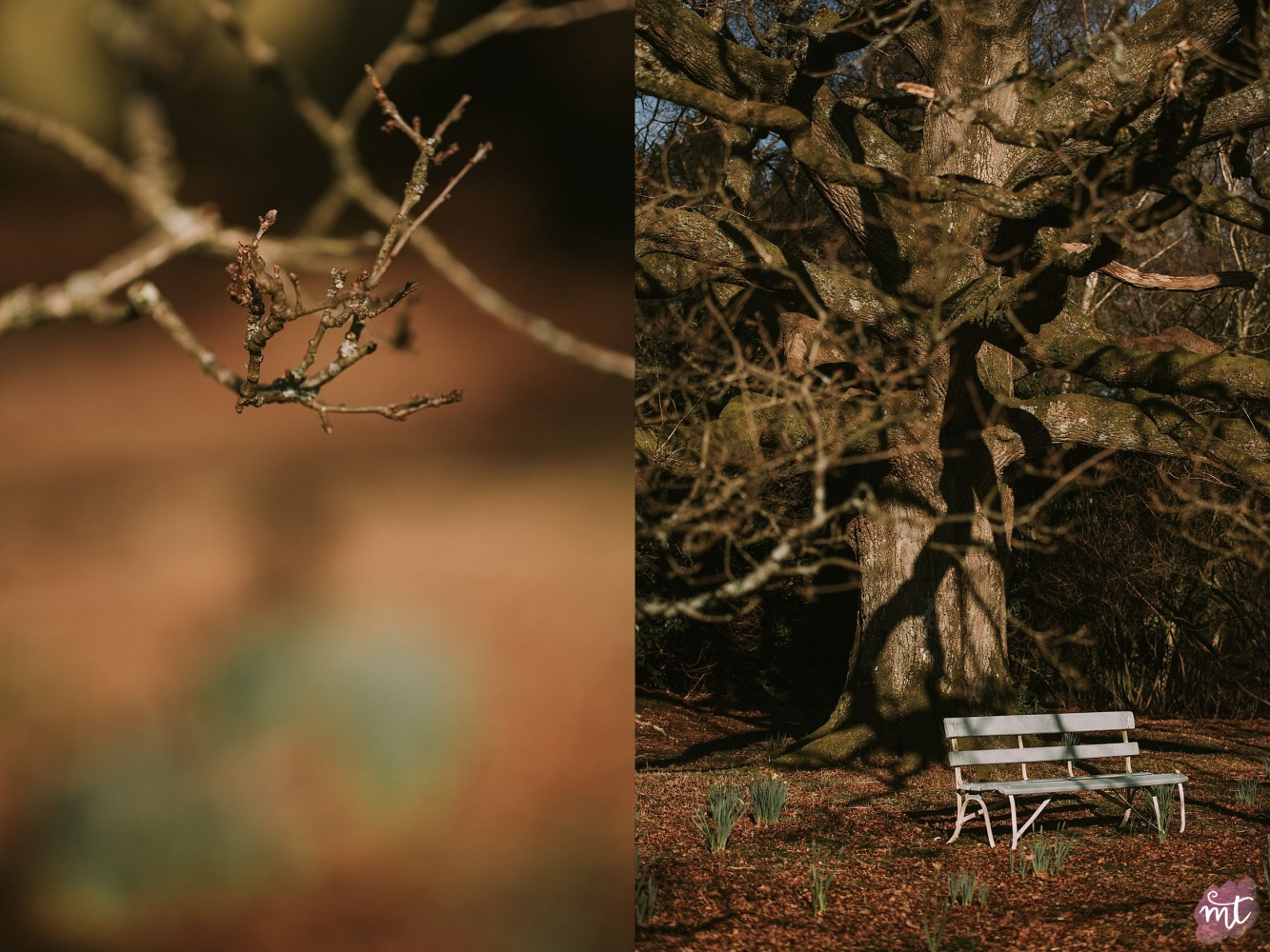 Seasons, Spring, Natural Light, UK Photographer, Real Life, Mother Nature