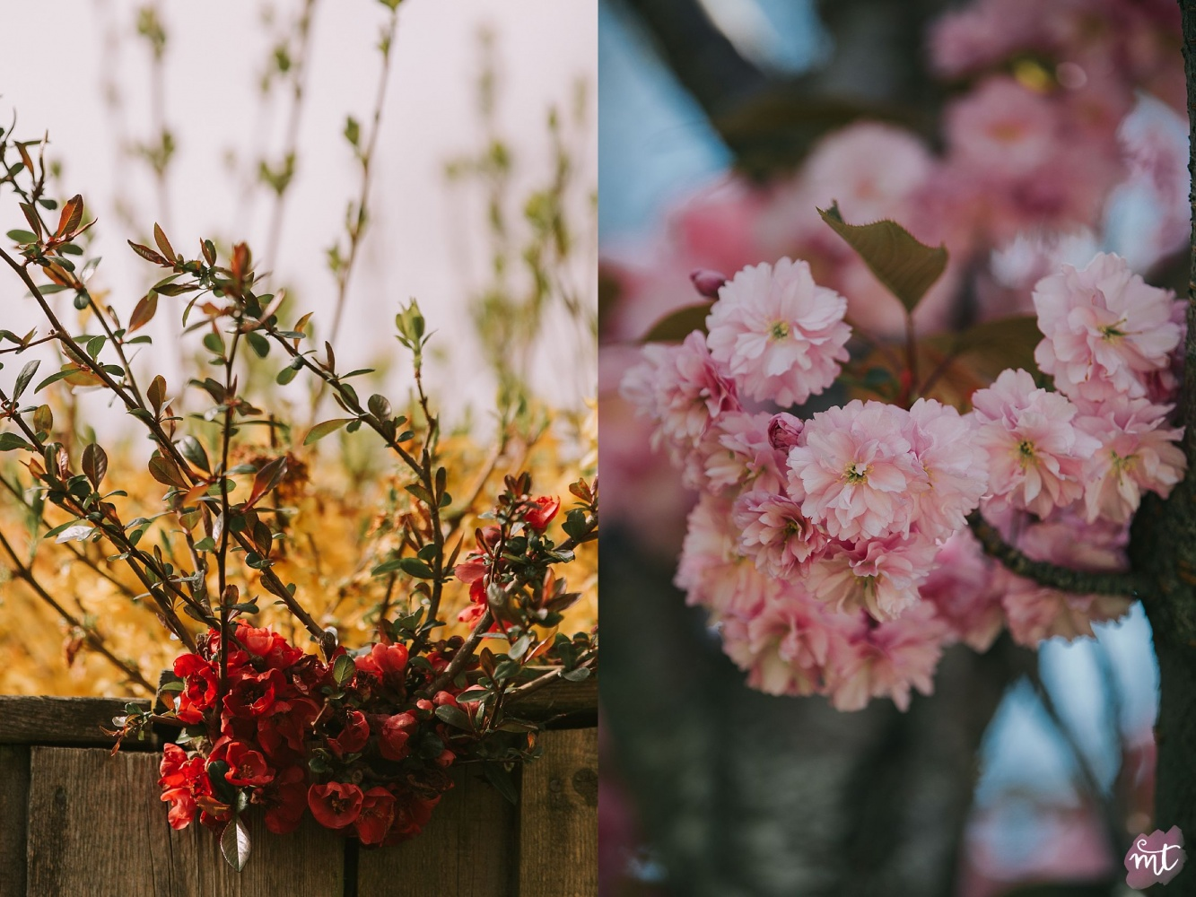 Seasons, Summer, Natural Light, UK Photographer, Real Life, Mother Nature, Cherry Blossom