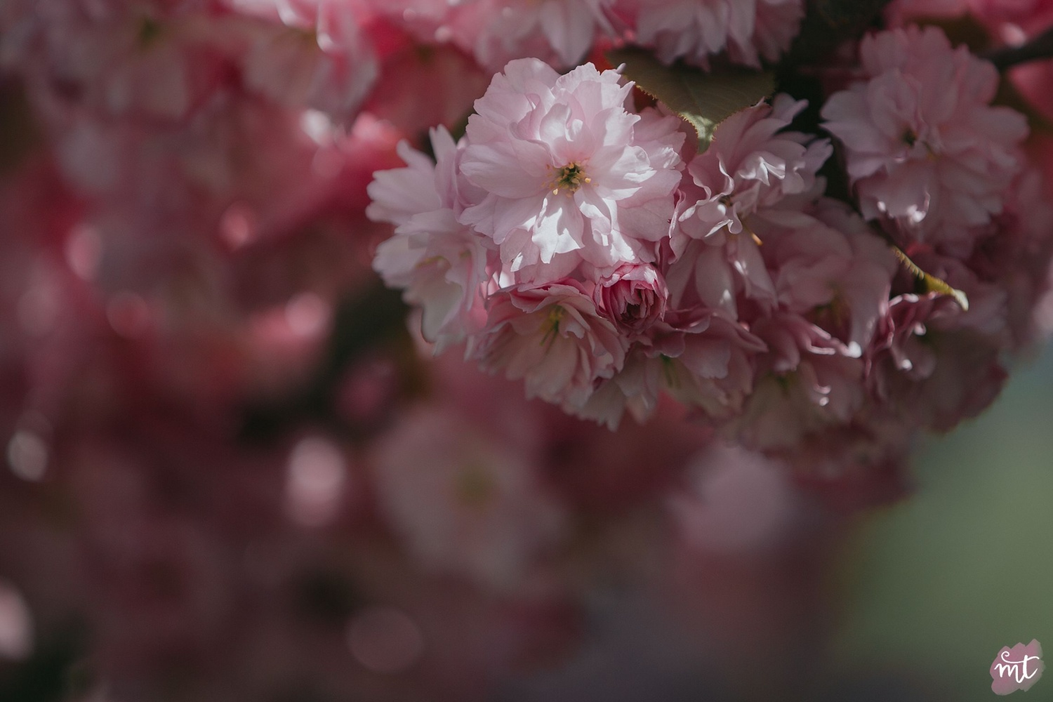 Seasons, Summer, Natural Light, UK Photographer, Real Life, Mother Nature, Cherry Blossom, Seasons: Spring, Summer, Autumn Winter English countryside