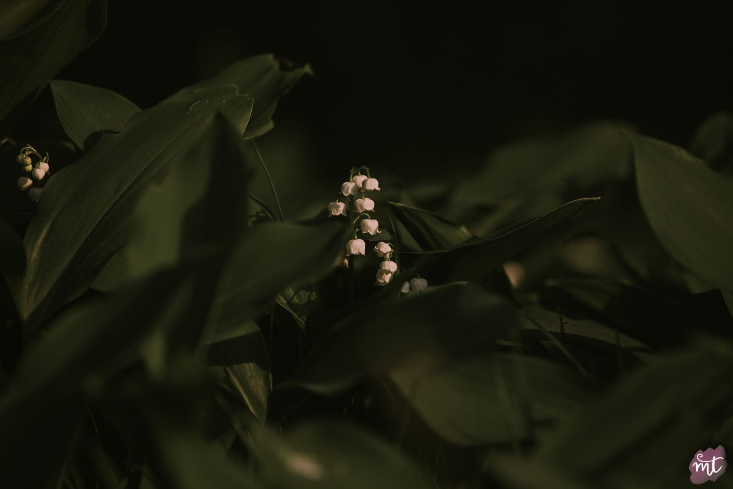 Seasons, Summer, Natural Light, UK Photographer, Real Life, Mother Nature, Lily of the Valley, Seasons: Spring, Summer, Autumn Winter English countryside