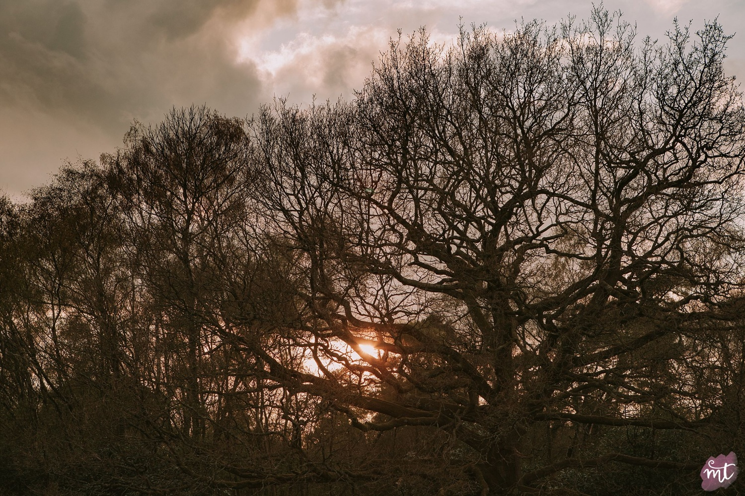 Seasons, Winter, Natural Light, UK Photographer, Real Life, Mother Nature