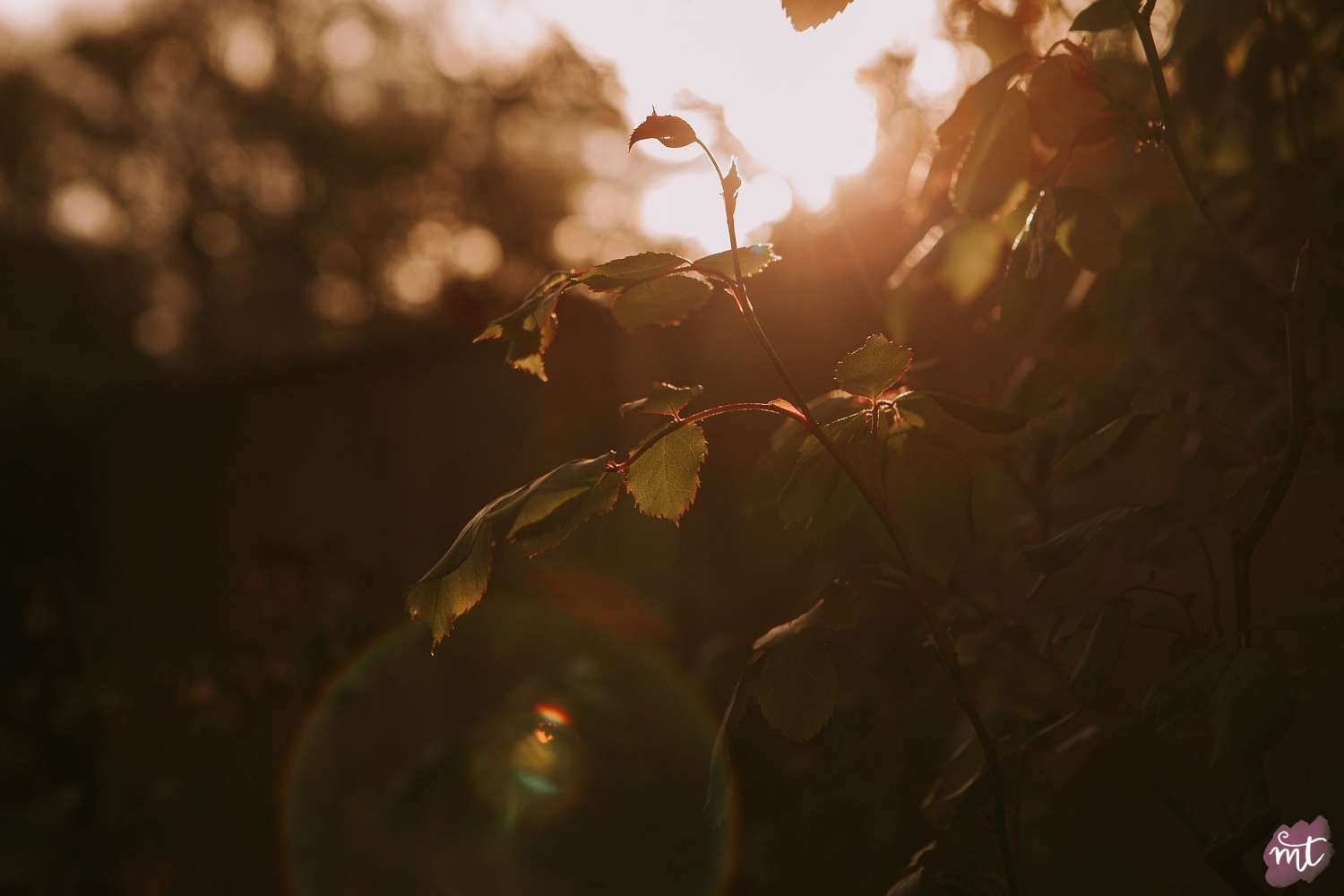 Seasons, Autumn, Natural Light, UK Photographer, Real Life, Mother Nature