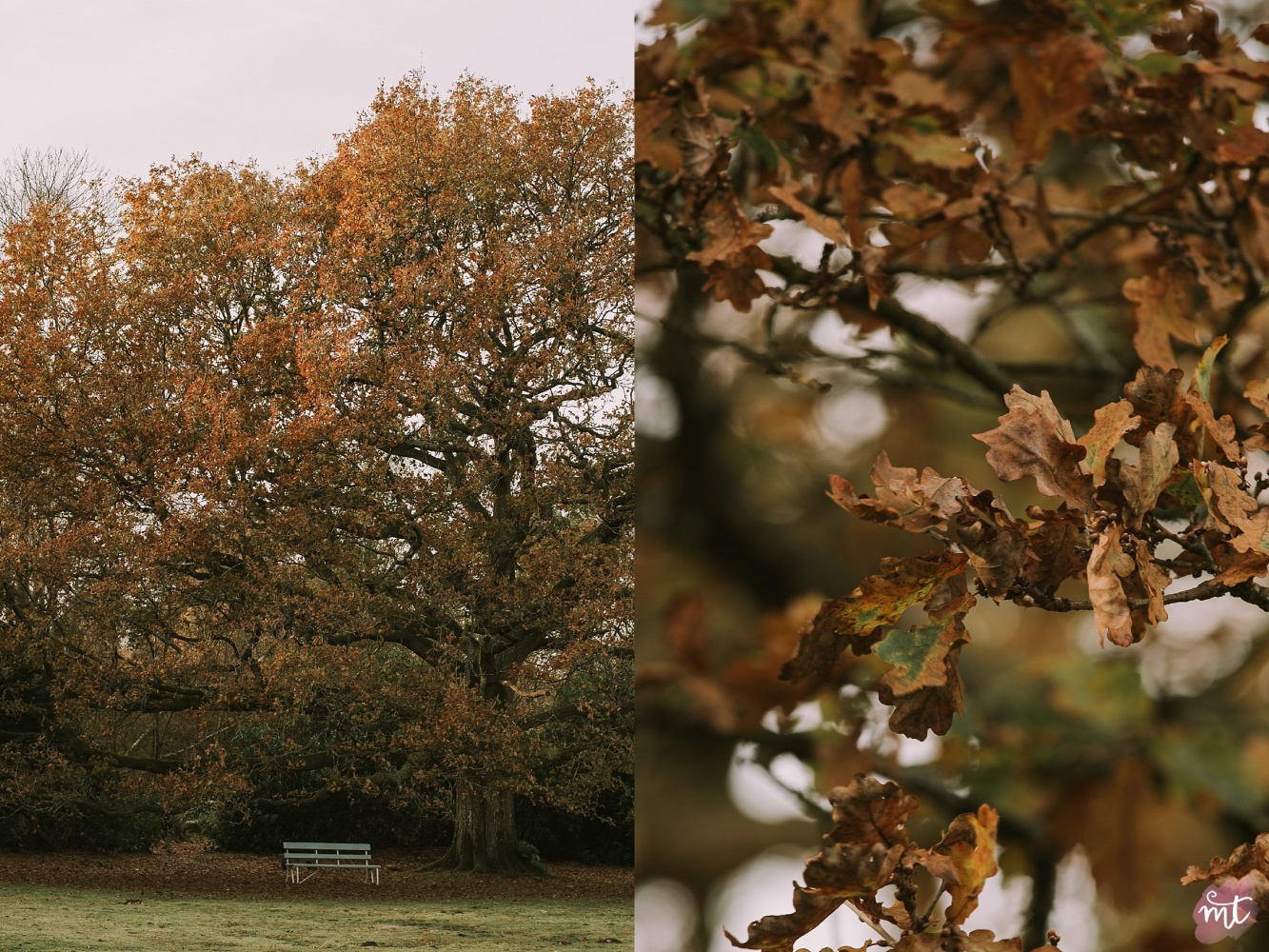 Seasons, Autumn, Natural Light, UK Photographer, Real Life, Mother Nature, Seasons: Spring, Summer, Autumn Winter English countryside