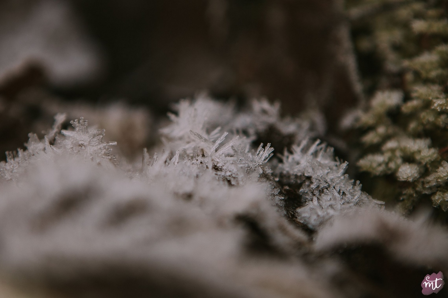 Seasons, Winter, Natural Light, UK Photographer, Real Life, Mother Nature, Jack Frost, Frost, Seasons: Spring, Summer, Autumn Winter English countryside