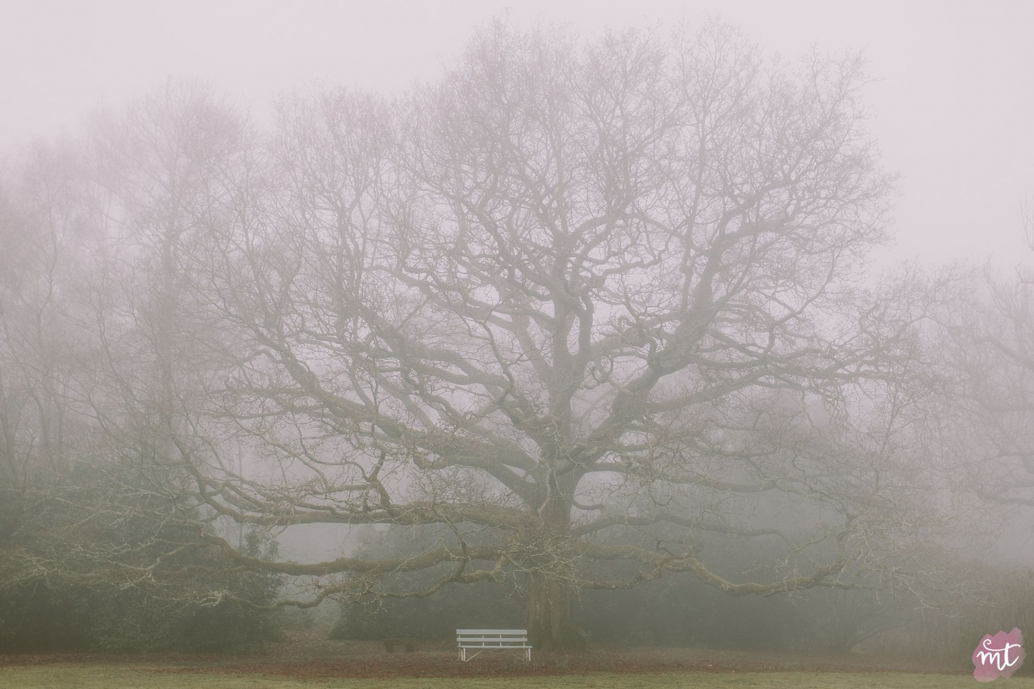 Seasons, Winter, Natural Light, UK Photographer, Real Life, Mother Nature, Fog, Foggy, Misty