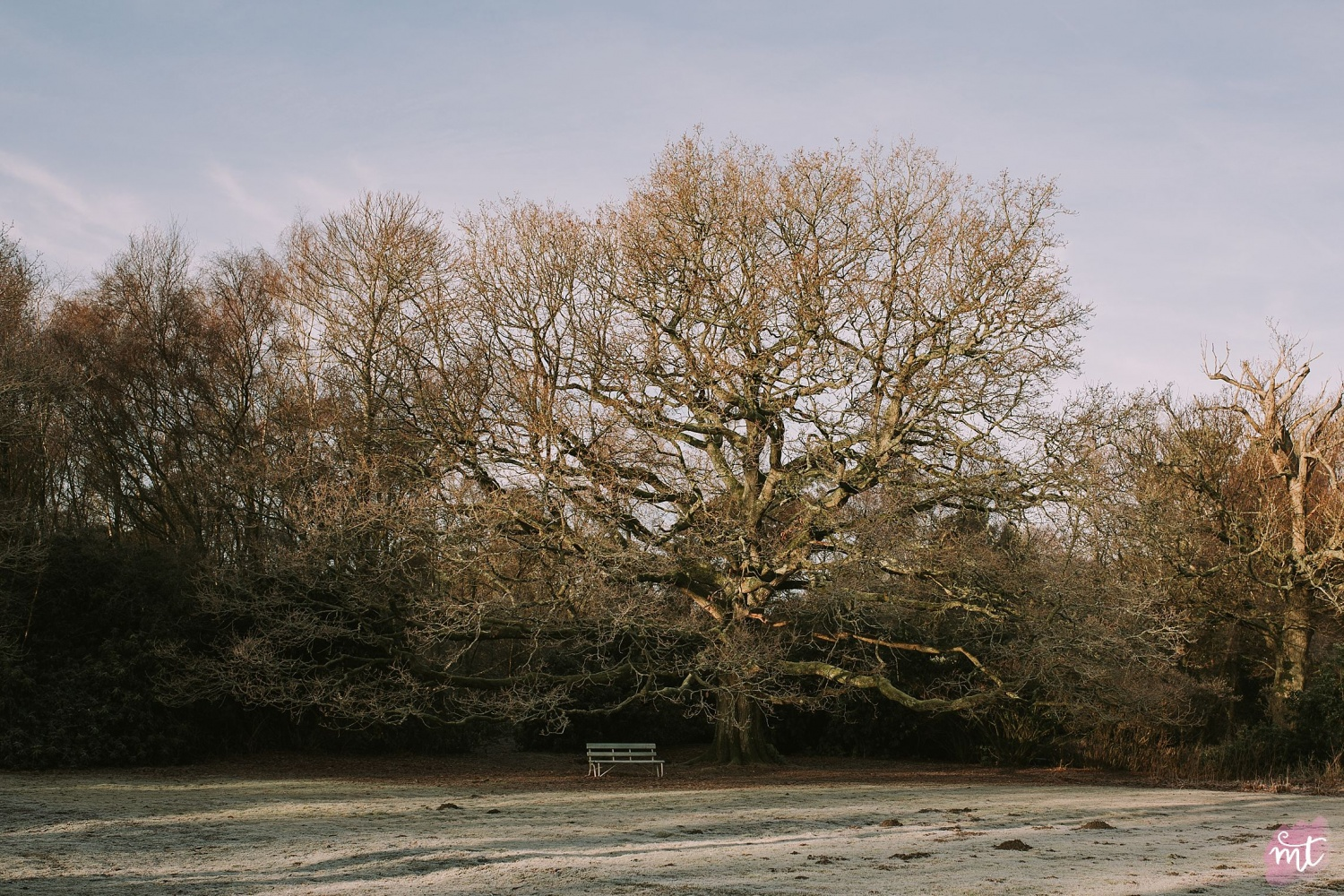 Seasons, Winter, Natural Light, UK Photographer, Real Life, Mother Nature, Frost, Jack Frost